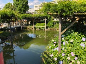 紫陽花が美しく、池の鯉や亀も出迎えてくれます。